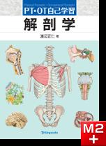 PT・OT自己学習 解剖学