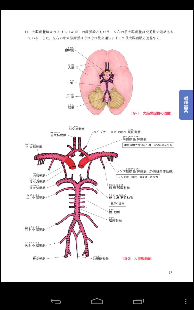 電子書籍版|PT・OT自己学習 解剖学 - M2PLUS